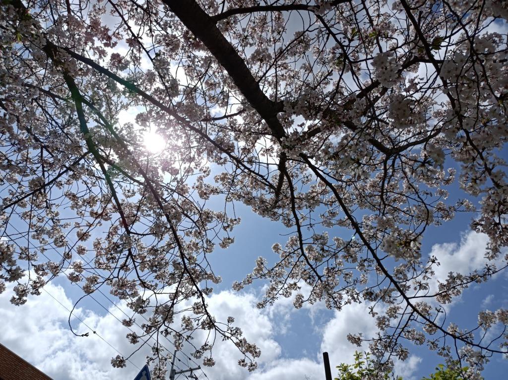 Redmi Note9tで撮影した写真3